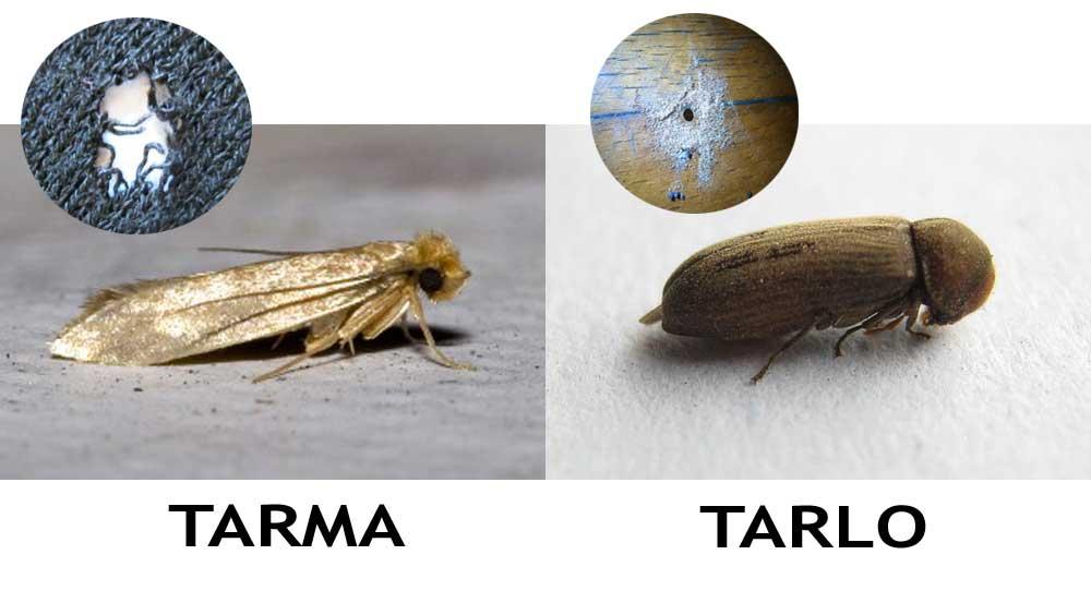 Mettiamo un po di ordine tra TARLI e TARME - Polignum